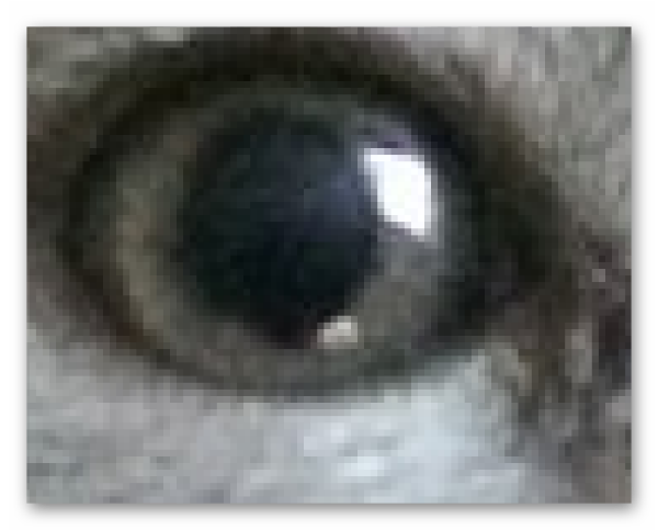 Пиксели на фото