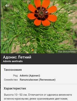 Описание растений