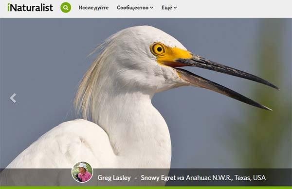 Сайт приложения iNaturalist