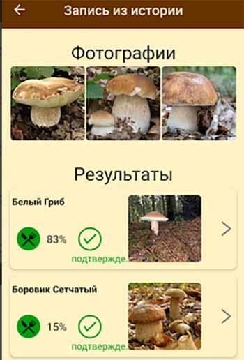 Идентификация гриба