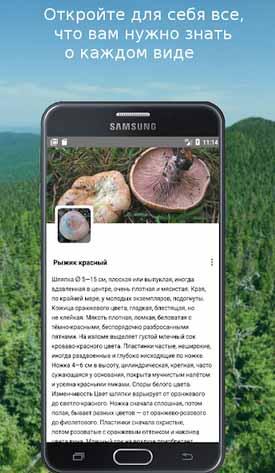 Описание грибов в приложении