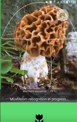 Иллюстрация идентификации гриба