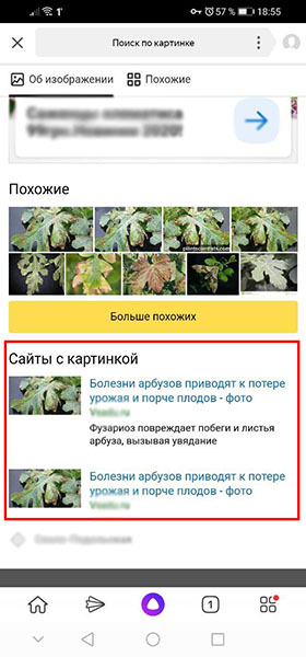 Похожие изображения